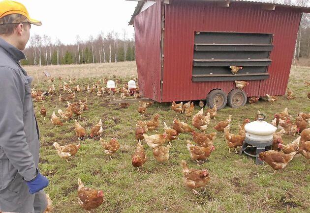 Daniel Hägerby bygger om gamla hövagnar till flyttbara hönsbostäder. Materialkostnad per vagn beräknas till cirka 10 000 kronor.