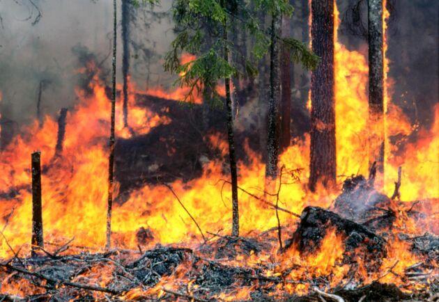 Varning för skogsbränder.