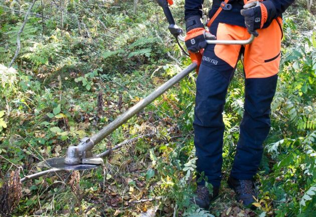 2000 gröna jobb tror Naturvårdsverket på att det går att skapa runt om i landet.
