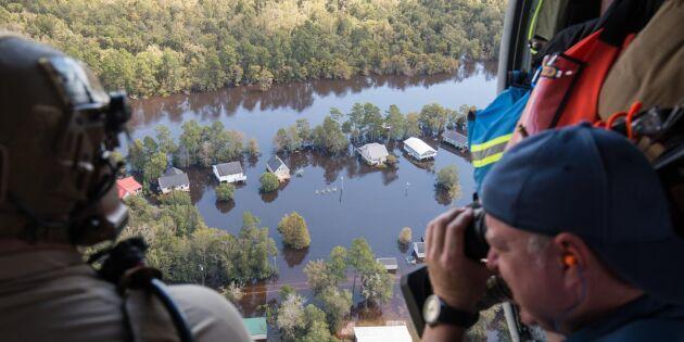 Miljontals döda tamdjur efter orkanen Florence