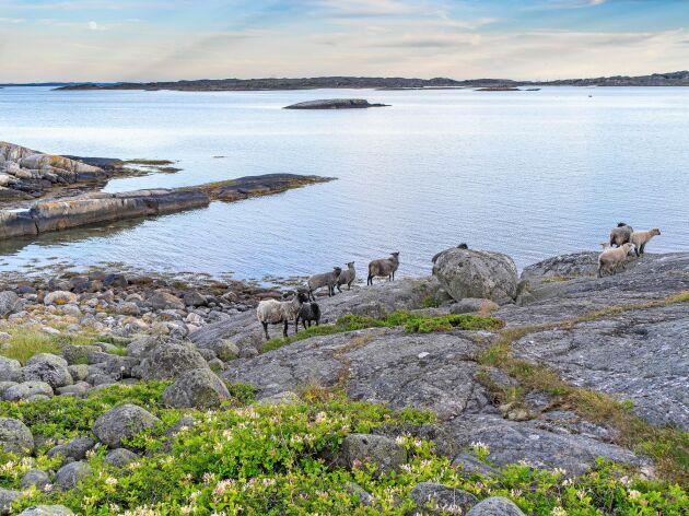 Kosterhavet i Bohuslän.
