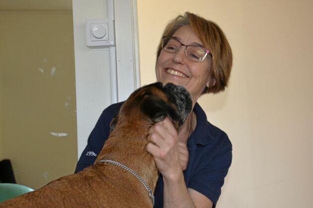 Eva Elfverson Wedins hundgym har blivit boxern Käckas favoritställe. Träningen har gett en rad positiva effekter för den femåriga tiken.