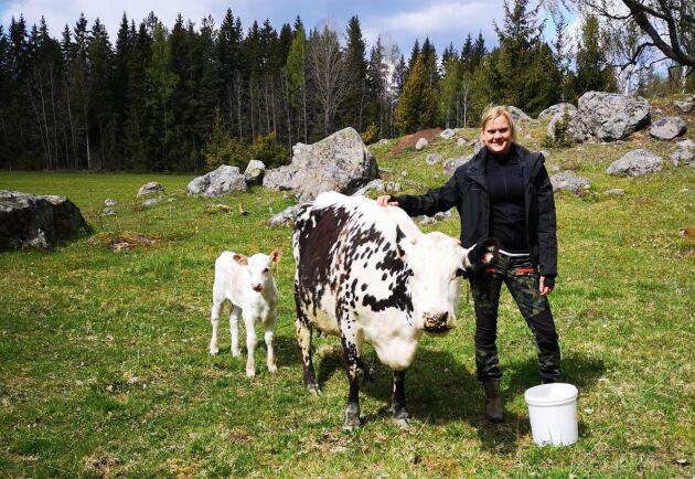 Kvigkalven Vilda har nu hunnit bli omkring två veckor gammal. Karolin Eriksson är lättad över att ordningen på gården Starrkärr återgått till det normala.