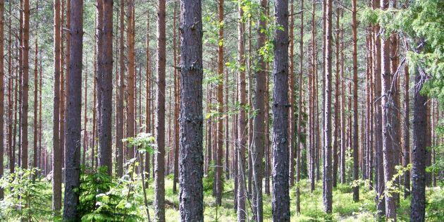 Starka skogsbolag tappar mot börsindex