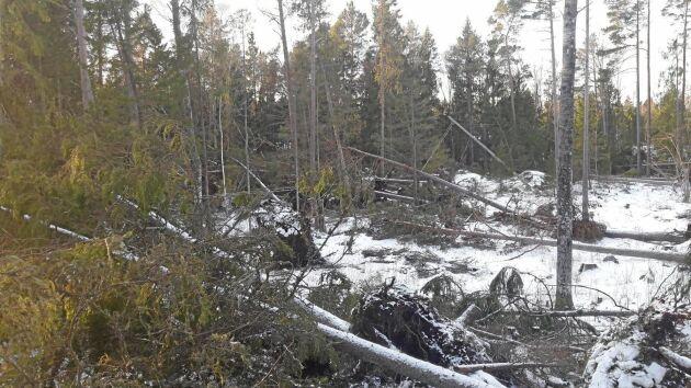 Skador på skogen av stormen Alfrida har bidragit till att avverkningsanmälningarna ökar.