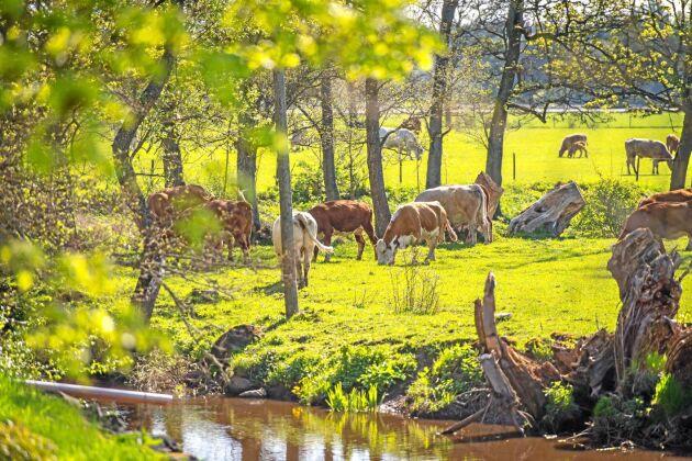Börstorp har en ekologisk betesproduktion och slaktar cirka 220 ungnöt per år. Köttet säljs i lådor och priset till konsument är i dagsläget 155 kronor per kilo.