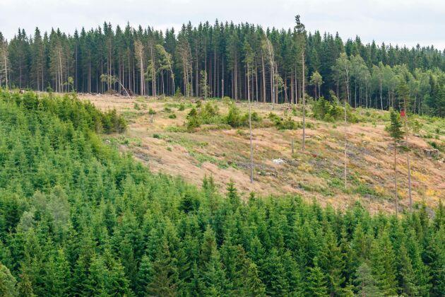 Skogsvårdsföretagen får anstränga sig mer för att få tag i personal.