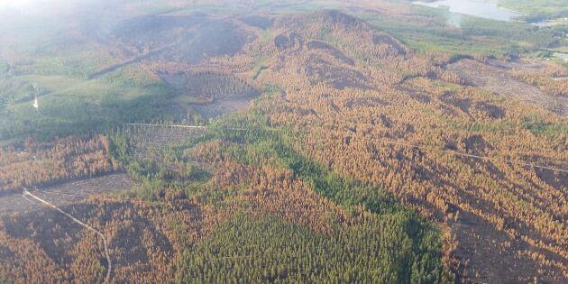 Nya flygfoton över brandhärjade skogar
