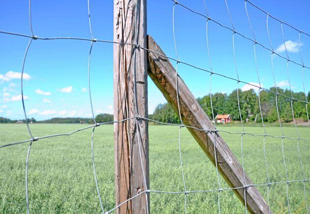 Djurägare i Falkenberg och Varberg kan ansöka om bidrag fär att stängsla in nya betesmarker.