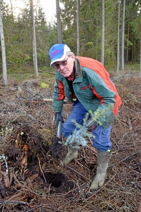 Planteringsborret har Anders Karlsson alltid med sig.
