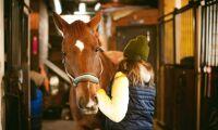Så ska arbetsgivare i hästsport bli bättre