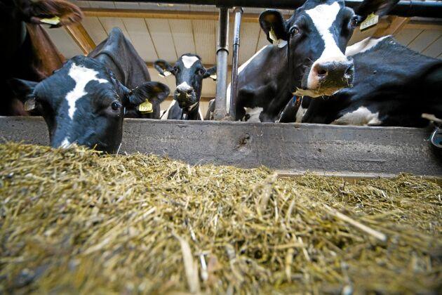 Mjölkproduktionen minskar i Sverige.