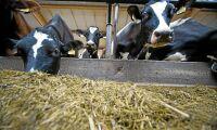 Arla höjer mjölkpriset till sina ägarbönder