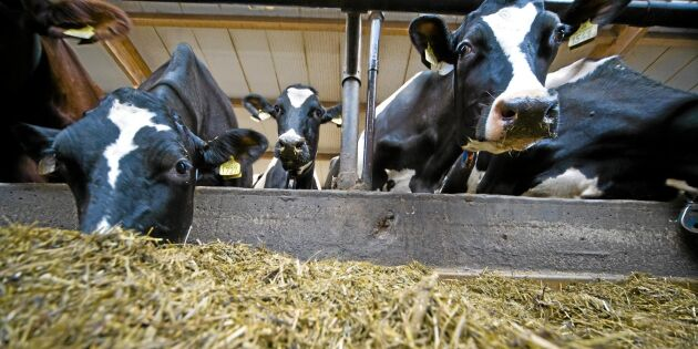 Minskad mjölkproduktion i Sverige
