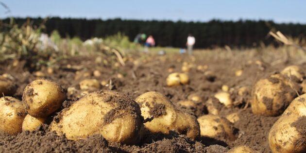 Potatisodlare vinner mot Eskilstuna kommun