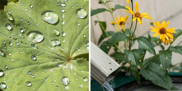 Rusta för torka! 5 smarta sätt att samla in vatten från naturen