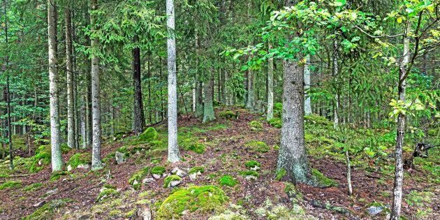 Glest med planer för digitalisering bland svenska skogsföretag
