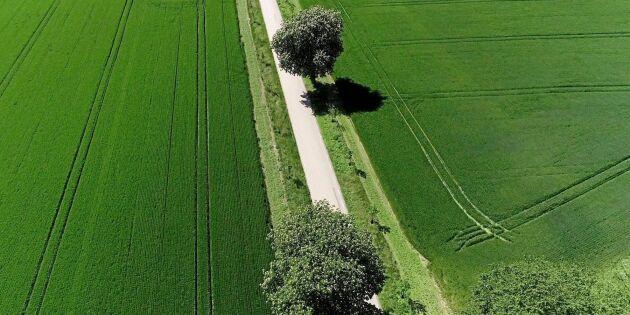 Miljöstöd och livsmedel fokus i nytt landsbygdsprogram