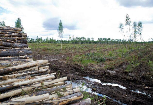 Det behövs en balans som tillåter medlemsländerna att kombinera ett aktivt skogsbruk med att bevara den biologiska mångfalden, skriver debattörerna.