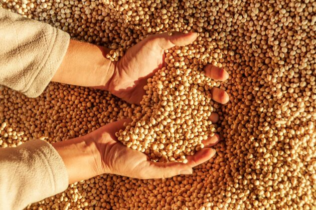 EU-kommissonen föreslog att EU-förordningen för ekologisk produktion skulle ändras så att det blev tillåtet att blanda i tio procent konventionellt proteinfoder i det ekologiska fodret till grisar och fjäderfän.