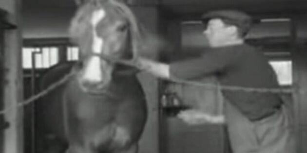 Hur tränade man travhästarna under 40-talet?