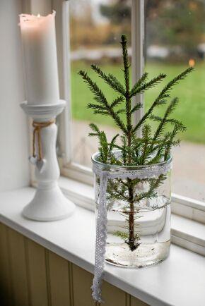 En grankvist i en glasvas blir en avskalat vacker julprydnad från naturen.