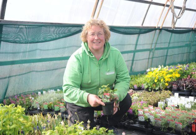 Jenny Karlsson, ordförande för LRF Norrbotten, driver en handelsträdgård. Hon hoppas på en samförståndslösning mellan renägande lantbrukare och övriga lantbrukare i regionen.