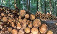 Träd är inte lika med inlagring av koldioxid