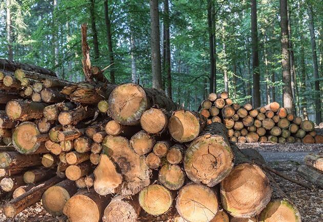 Gunnar Turesson fån Skellefteå menar att träd inte automatiskt är lika med inlagring av koldioxid.
