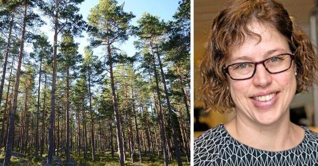 Vibeke Alstad, skogsekonom på LRF Konsult, svarar på läsarnas frågor.
