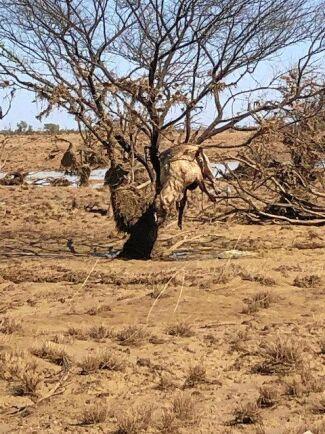 Vattnet forsade snabbt fram och sköljde bort boskap, gårdens ogräs och all taggtrådsstaket runt gården.