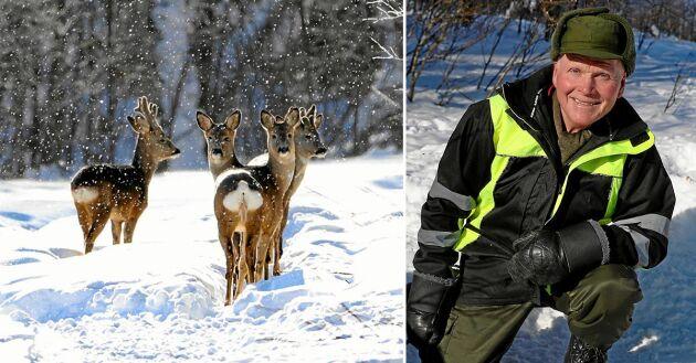 Karl-Erik matar svältande rådjur i Råneå.