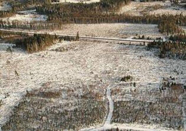 Stora skador. Orkanen Gudrun orsakade enorm förödelse när den drog in över Sverige den 8 till 9 januari 2005. Foto: Torbjörn Esping