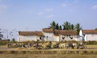 Växthuseffekten delorsak till att 60000 indiska bönder begick självmord