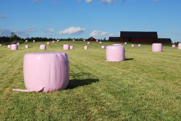 """Mjölkproducenten Camilla Olsson tror att hon kommer att få en del frågor från sommarboende i närheten av gården om de """"rosa dinosaurieäggen"""" i sommar."""