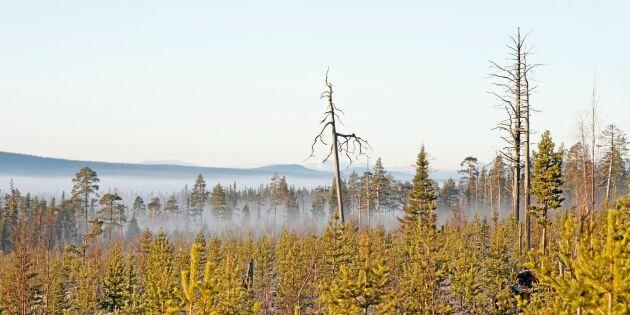 Kan man bruka skog utan att ett träd huggs ner?