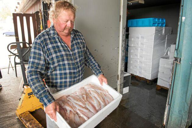 Pappa Conny, 63 år, är van att slita för att snabbt få in den nyfångade fisken i kylrummet.