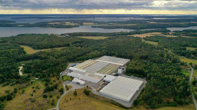 Svegros växthus är 55000 kvadratmeter, och på 45000 kvadratmeter av dem odlas det på. Största produkten sett till försäljningsvolym är basilika i kruka.