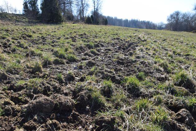 Lantbruket drabbas av vildsvinsskador för långt över en miljard kronor per år.