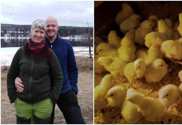 Åsa Lindmo och Magnus Eriksson – sannolikt Sveriges nordligaste kycklingproducenter.