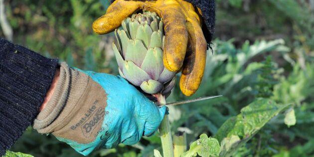 """Forskare: """"Går att leva på småskalig odling"""""""