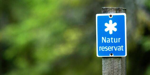 Stort intresse för reservat efter skogsbränderna