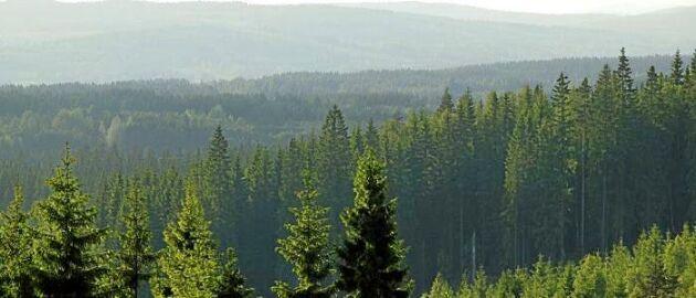 Bergviks 2,3 miljoner hektar skog delas upp mellan Stora Enso och Billerud Korsnäs.