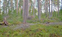 Återbeskoga gärna med blandskog