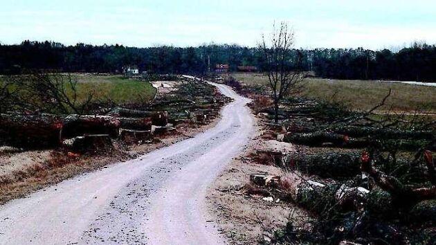 Kvinnan hävdar att man fått en muntlig dispens för att avverka träden i allén, som bedömts som en av fem mest värdefulla i västra Östergötland.