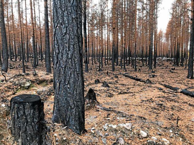 Den förstörda skogen bestod av allt från kalhyggen och ungskog till väldigt gammal skog som var redo för avverkning.