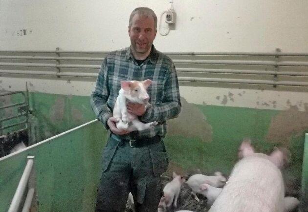 Fredrik Lindh grisbonde i Burträsk förlorar pengar när Burträsk slakteri gick i konkurs i december 2018.