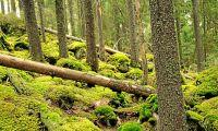 Ekoparkerna skapar mångfald