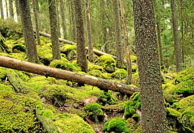 Förslaget att göra om ekoparker till nationalparker signalerar att frivilliga initiativ inte tas på allvar, tycker Mats Blomberg.