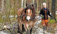 Järva Trädvårdscenter årets hästföretagare